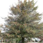 web1_Tree.JPG