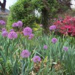 web1_2015-06-Gardening-Adventures.JPG