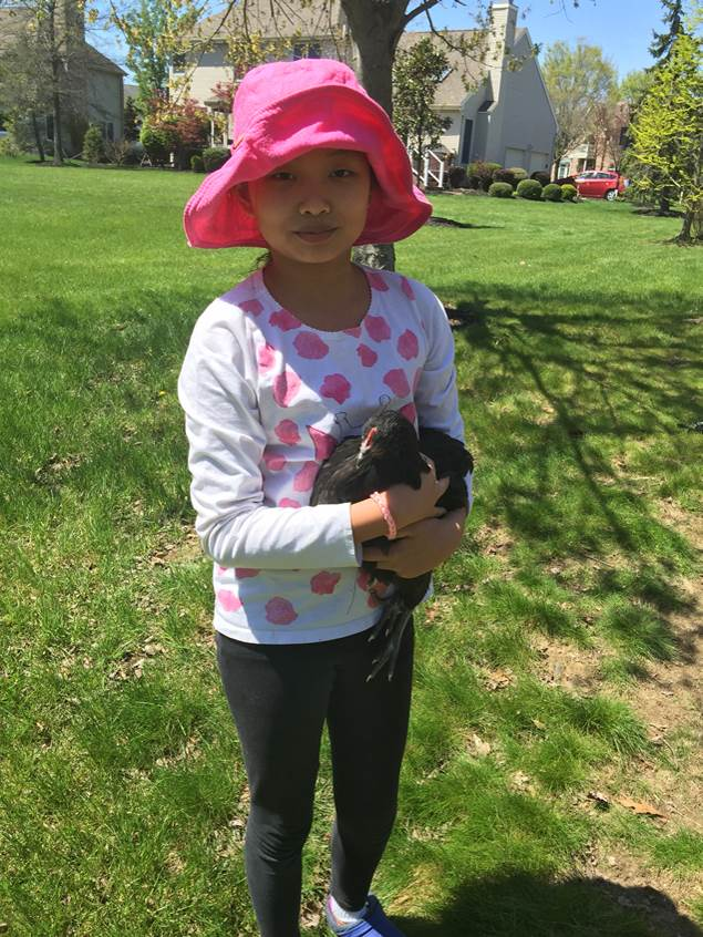 A game of chicken: complaints lead to fowl affair in West Windsor
